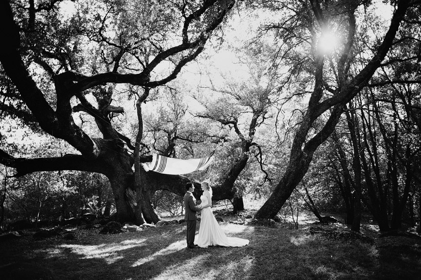placerville wedding photographer, rita & adam under an CA oak tree