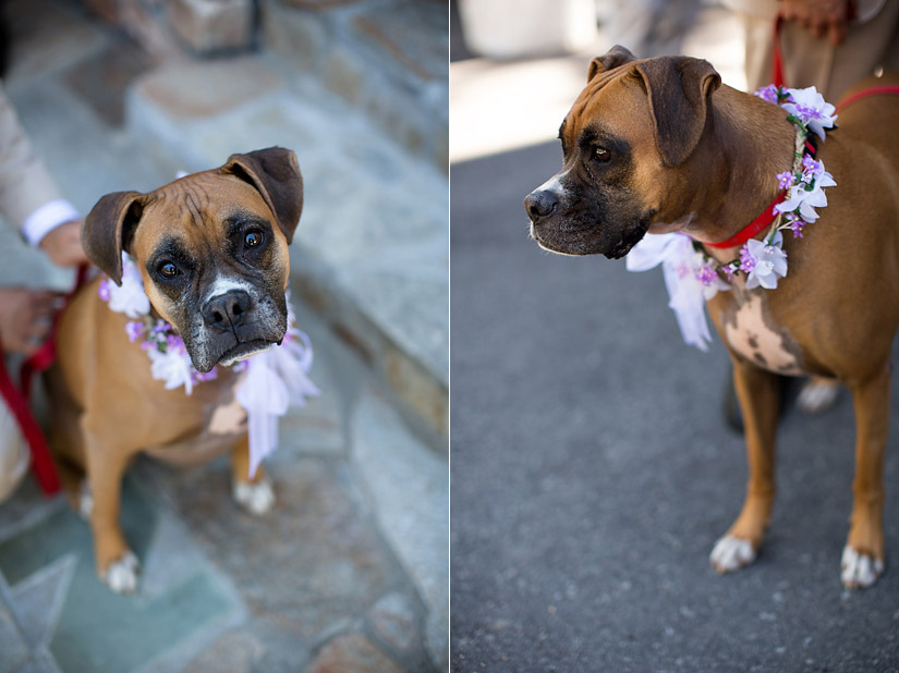 a dog as a flower girl photo
