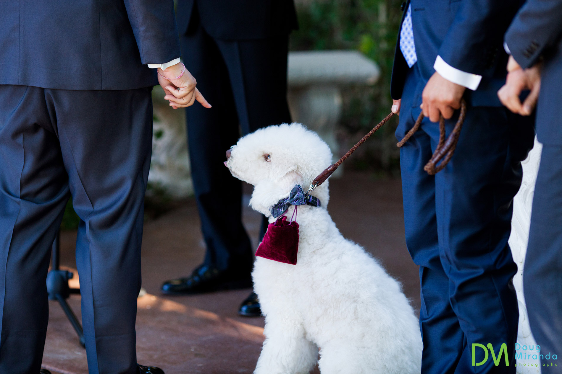 photos of dogs in weddings